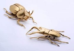 Biology Edition Beetle vs Stag Beetle Showdow