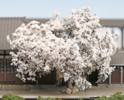 24-366 Japanese Cherry Blossom Trees KIt (12
