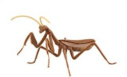 Biology Edition Big Mantis (Brown)
