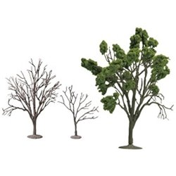 The Tree 101 Ornamental Bonsai Tree Zelkova
