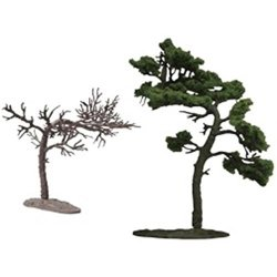 The Tree 103 Black Pine Tree Japanese Black P